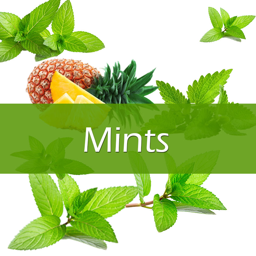 100ml Vapelf Mints Concentrated Flavors